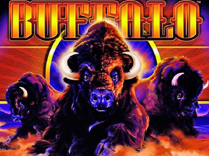 buffalo grand